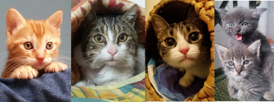 collage gatti